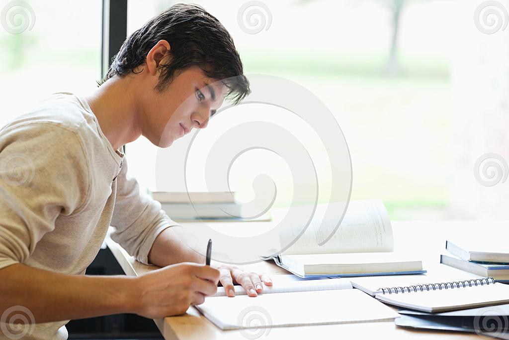 The essay guy